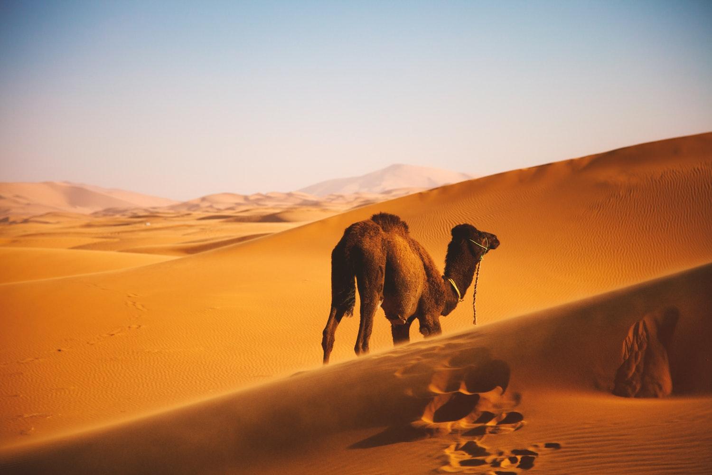 photo 1518978288375 f36cefcc992e - Der Sahara-Staub: Wie wirkt er sich auf die iberische Halbinsel aus?