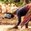 Besorgniserregender Plagenausbruch betrifft acht Menschen in Madagaskar 64x64 - Besorgniserregender Plagenausbruch betrifft acht Menschen in Madagaskar
